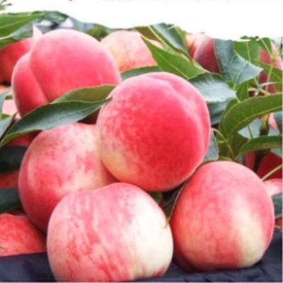 特级新鲜水蜜桃5斤装