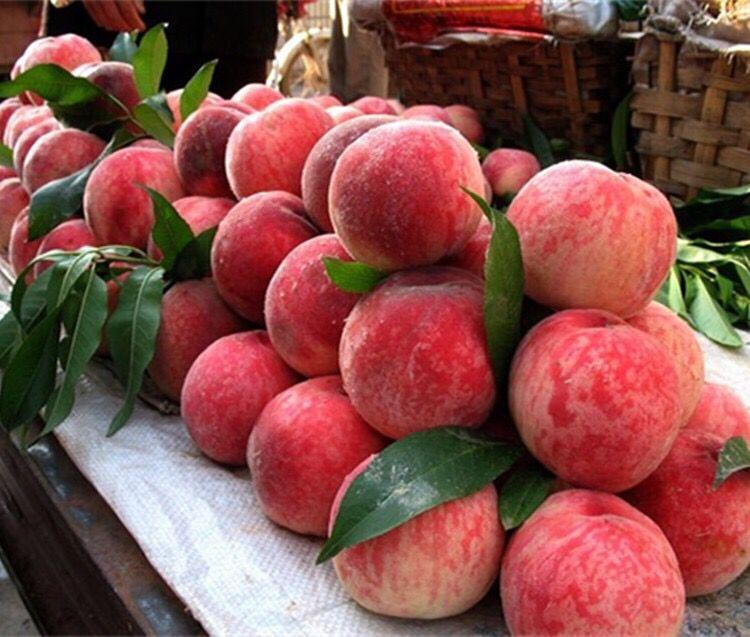 沂蒙山天然水蜜桃4.8斤